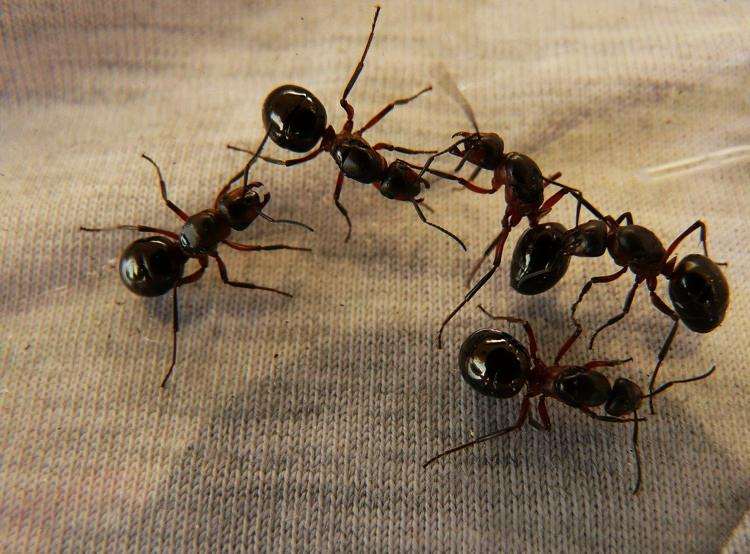 Ant infestation example