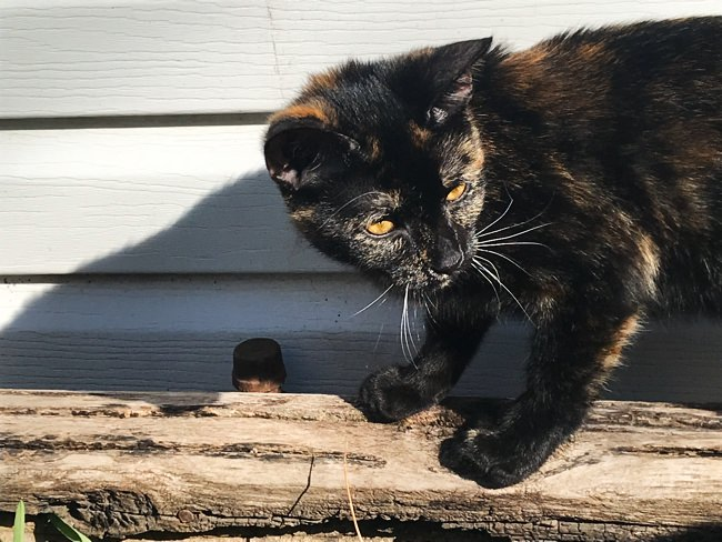 Pet cat in backyard of new house